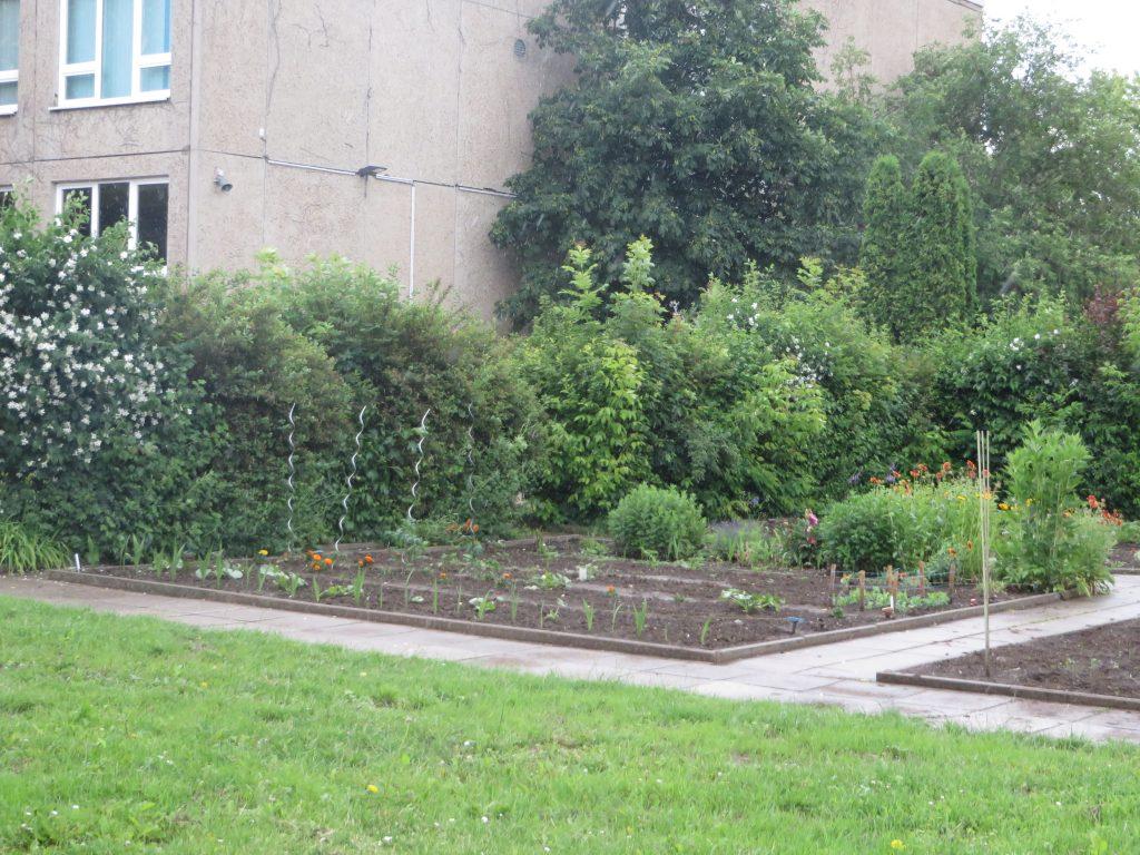 Fertig: das neue Beet ist bepflanzt