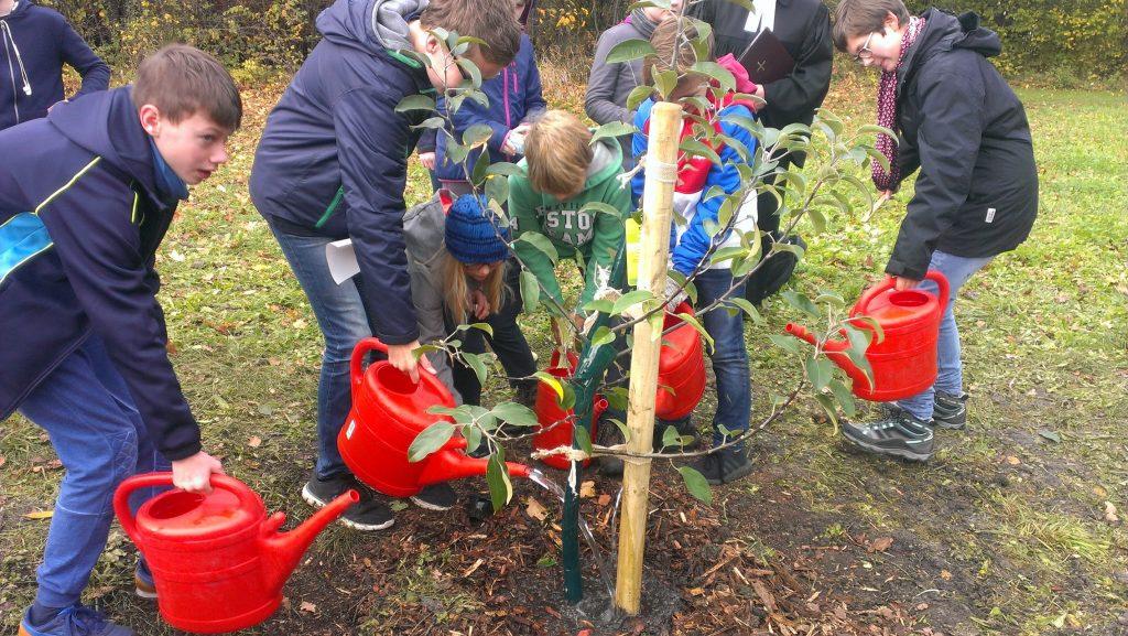 Ein Lutherbaum für den Lutherpark